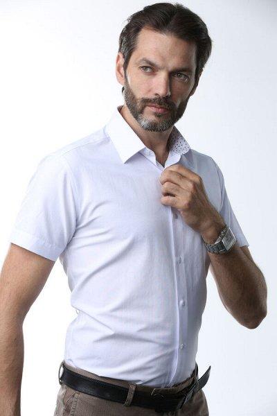 NicoloAngi_Качественно и Супер бюджетно рубашки — Рубашки классические - короткий рукав — Короткий рукав