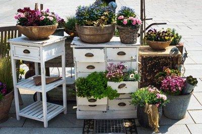 Семена Аltая Цена за 2 пачки — Цветы комнатные — Семена цветов