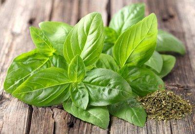 Семена Аltая Цена за 2 пачки — Зелень — Семена овощей