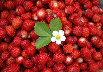 Семена Аltая Цена за 2 пачки — Ягода — Семена овощей