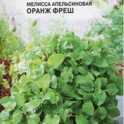 Семена Партнер и Семко - свободное в счете! В пути! — Пряновкусовые — Семена зелени и пряных трав