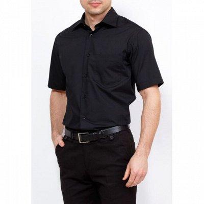 Мужские рубашки, трикотаж, галстуки  — Короткий рукав Casino — Короткий рукав
