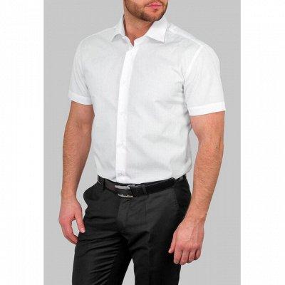 Мужские рубашки, трикотаж, галстуки  — Короткий рукав GREG_1 — Короткий рукав