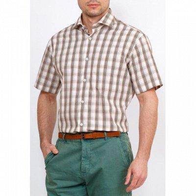 Мужские рубашки, трикотаж, галстуки  — Короткий рукав GREG_3 — Короткий рукав