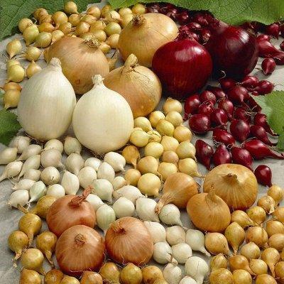 🍀LEROY MERLIN🍀Дом для дома! — 40% Лук-севок — Семена зелени и пряных трав