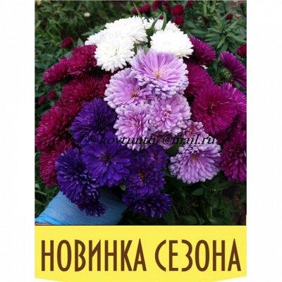 12-Мир хризантем (Предзаказ на весну 2021г). — НОВИНКИ астры — Декоративноцветущие