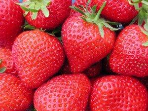 Флоренс Тонкий лесной аромат, отменный вкус и крупные одномерные плоды — мечта фермеров, специализирующихся на выращивании клубники. Сорт с такими уникальными качественными характеристиками существует