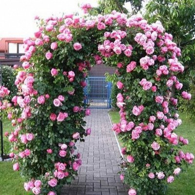 Дачный сезон: готовимся к сезону — Металлические арки, шпалеры — Садовый декор