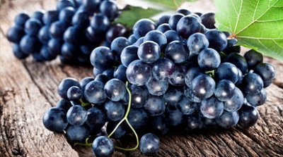 Виноград на посадку весной 2021. Весна уже скоро — Ранний — Плодово-ягодные