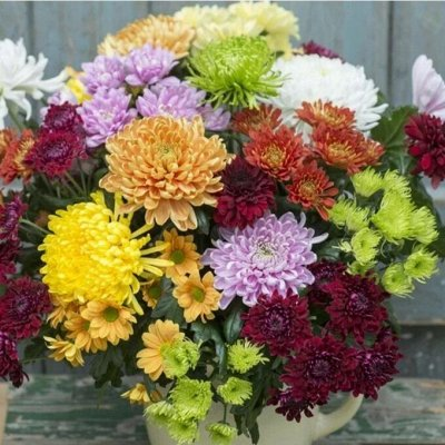 12-Мир хризантем (Предзаказ на весну 2021г). — Комплекты(ассорти) — Декоративноцветущие