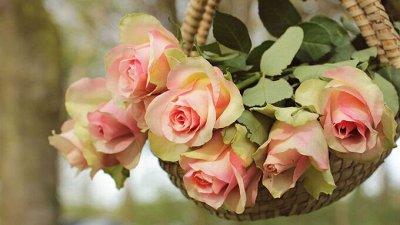 Розы (посадка Весной) Польша *Оплата 50/50