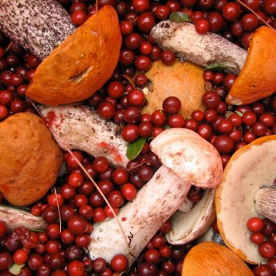 Приморский Вкусный и Полезный Мёд-2020. Быстрая раздача — Грибы сухие и солёные (06.04 добавлены НОВИНКИ) — Овощные и грибные