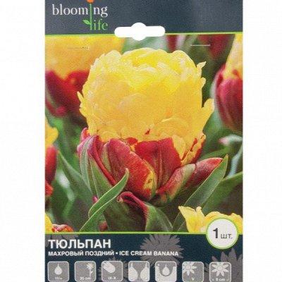 🍀LEROY MERLIN VL Лампы для растений, проращиватели — 40% Луковичные цветы - осенняя посадка — Декоративноцветущие