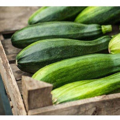 Семена Аltая Цена за 2 пачки — Кабачок — Семена овощей