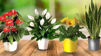 Семена Аltая Цена за 2 пачки — Цветы комнатные — Семена многолетние