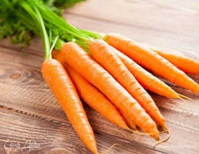 Семена Аltая Цена за 2 пачки — Морковь — Семена овощей