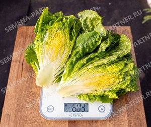 Партнер салат кочанный бернар ^(0,5г)