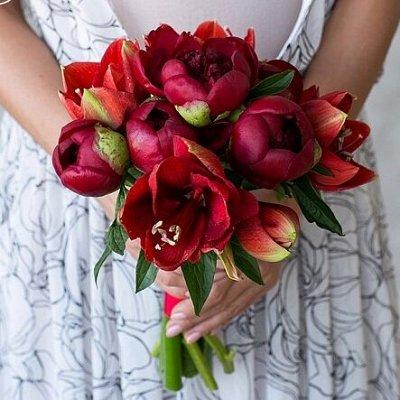 Цветочные луковицы Весна 2021 * Оплата 50/50 — Амариллисы (Гиппеаструм) — Декоративноцветущие