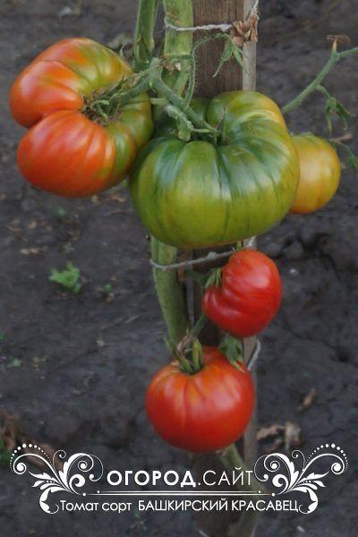 Семена Азии, Мязина, Сибирский сад — все в наличии! — Семена Мязиной — Семена