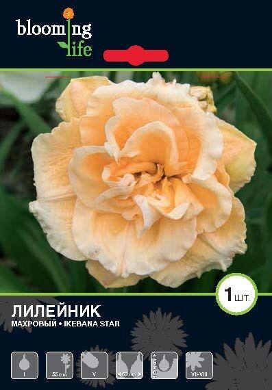 7 цветов! Многолетники! пакетированные !Предзаказ, 30% — Лилейники — Декоративноцветущие