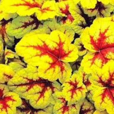 7 цветов! Многолетники! пакетированные! Предзаказ, 30%