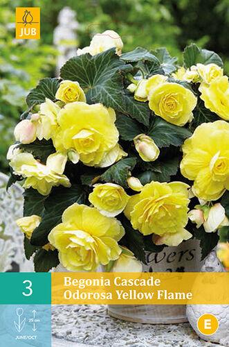 7 цветов! Шикарные пакетированные луковицы! предзаказ!  — РАЗНЫЕ ВИДЫ — Декоративноцветущие