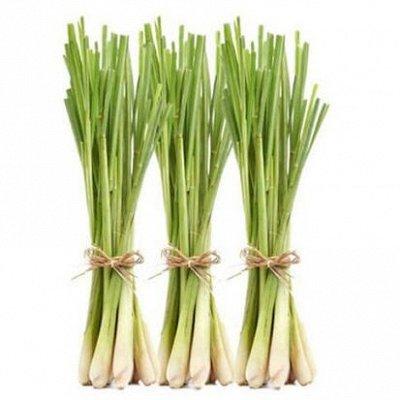 Все для Стирки 👕👗с ароматами Духов 🗼+ Дезинфекция 🚨 — Семена * Немного Таиланда у вас дома — Семена овощей