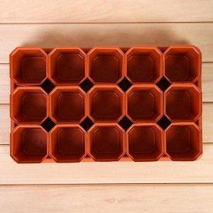 Набор для рассады: стаканы по 300 мл (15 шт.), поддон 41 ? 25 см, МИКС