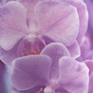 Кашпо «Орхидея». 1.6 л. 14 х 14 см