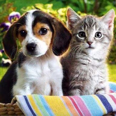 ✌ ОптоFFкa*Всё в наличии* Всё для кухни и дома и отдыха*✌ — Любимым питомцам — Для животных