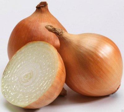 Лук севок предзаказ на весну 2021. Оплата 50/50 Свободное — Лук  севок 0,5 кг (Голландия) — Семена овощей