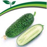 Семена Партнер и Семко. Летом — дешевле! Сроки годности 👍 — Огурцы партенокарпические для защищённого грунта