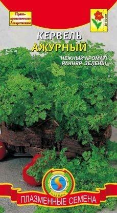 Пряность Кервель Ажурный ЦВ/П (ПЛАЗМА)