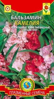 Цветы Бальзамин Камелия ЦВ/П (ПЛАЗМА) однолетнее 40-45см