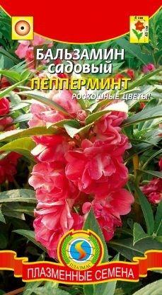 Цветы Бальзамин Пепперминт ЦВ/П (ПЛАЗМА) красный однолетнее 40-45см