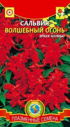 Цветы Сальвия Волшебный огонь ЦВ/П (ПЛАЗМА)