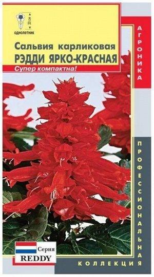 Цветы Сальвия карликов Рэдди Ярко-Красная ЦВ/П (ПЛАЗМА)
