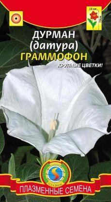 Цветы Датура (Дурман) Граммофон ЦВ/П (ПЛАЗМА) однолетнее до 80см