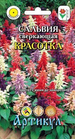 Цветы Сальвия Красотка ЦВ/П (АРТИКУЛ)