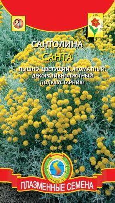 Цветы Сантолина Санта ЦВ/П (ПЛАЗМА)