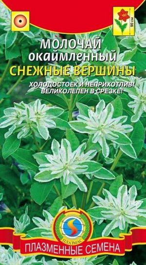 Цветы Молочай окаймленный Снежные вершины ЦВ/П (ПЛАЗМА) однолетнее до 90см