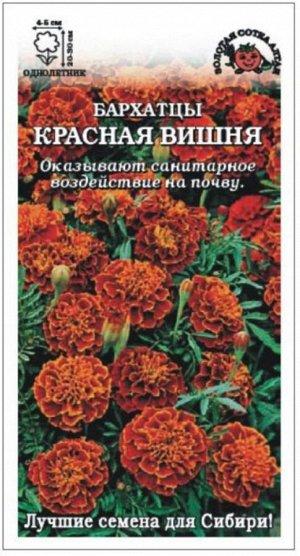 Цветы Бархатцы Красная Вишня ЦВ/П (Сотка) отклоненные 20-30см