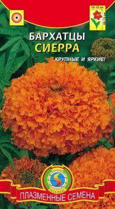 Цветы Бархатцы Сиерра Оранжевые ЦВ/П (ПЛАЗМА) прямостоячие 65-75см