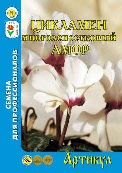 Цветы Цикламен АМОР персидский 7шт (Артикул) многолетн
