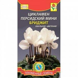 Цветы Цикламен Бриджит мини персидский 3шт /ЦВ/П (ПЛАЗМА)