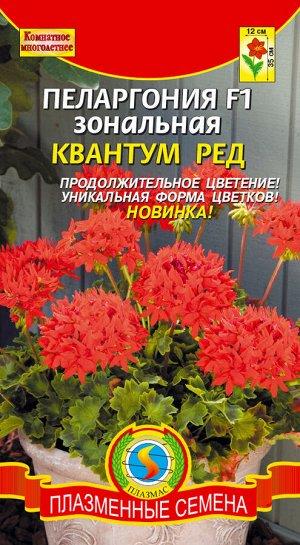 Цветы Пеларгония Квантум Ред F1 зональная ЦВ/П (Плазма) комнатное 35см