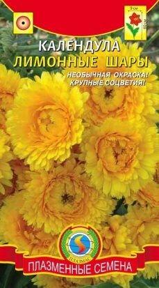 Цветы Календула Лимонные шары ЦВ/П (Плазма) однолетнее 60см