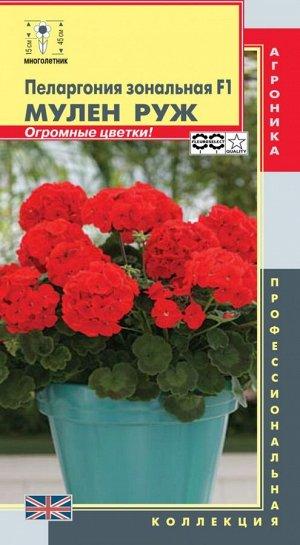 Цветы Пеларгония Мулен Руж зональная F1 ЦВ/П (ПЛАЗМА) комнатное 45-50см