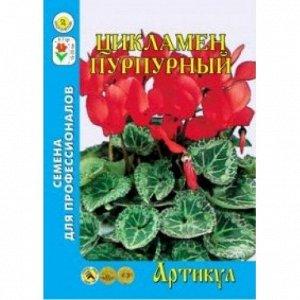 Цветы Цикламен Пурпурный персидский 7шт (Артикул) многолетн