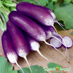 Редис Полезный завтрак ЦВ/П (НК) раннеспелый фиолетовый длинный